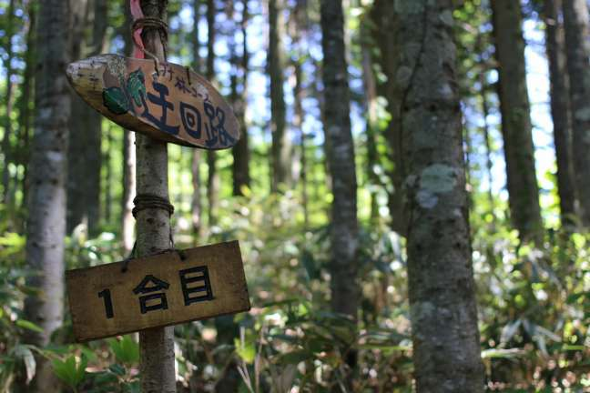 黒松内岳ブナ林コース