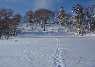 迷沢山・阿部山登山|平和の滝からスノーシューで送電線ルートへ(1月上旬)