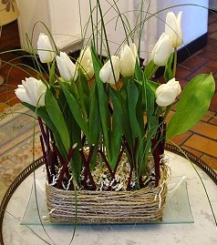 plessis de tulipes
