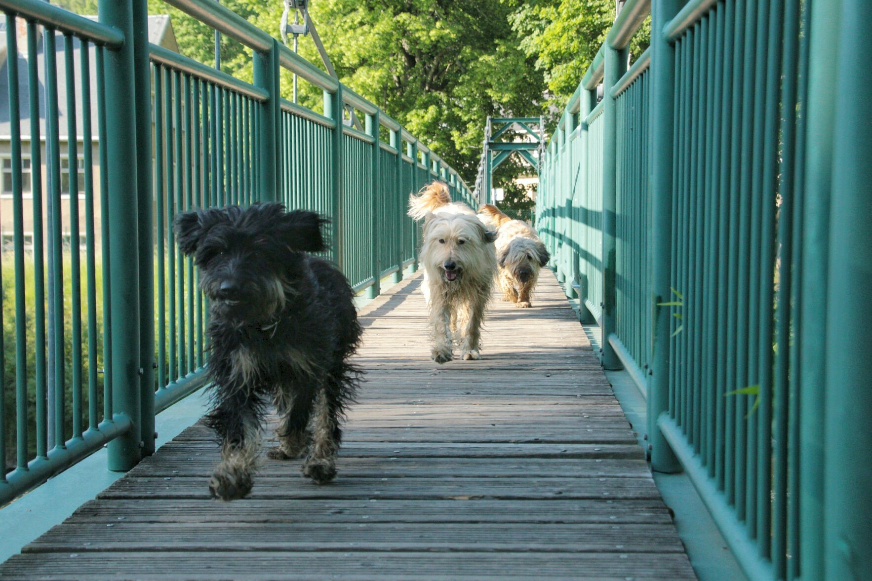 Lili macht es Spaß über die Brücke zu rennen