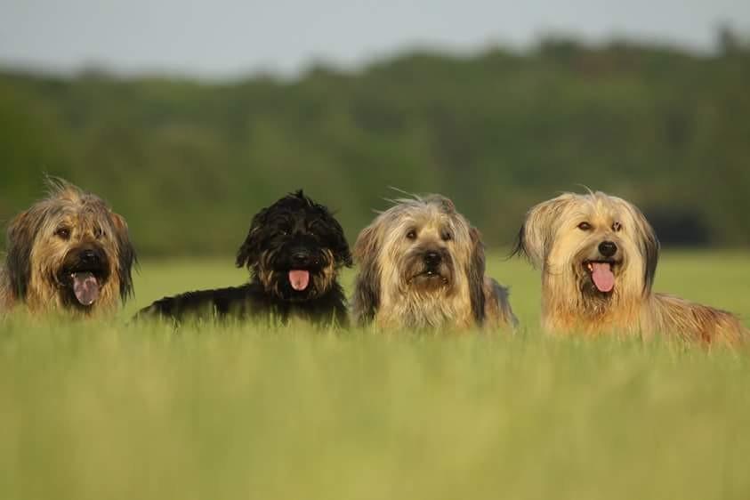 Aila, Lili, Benni und Ida