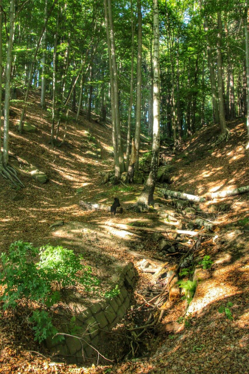 anschließender Waldspaziergang
