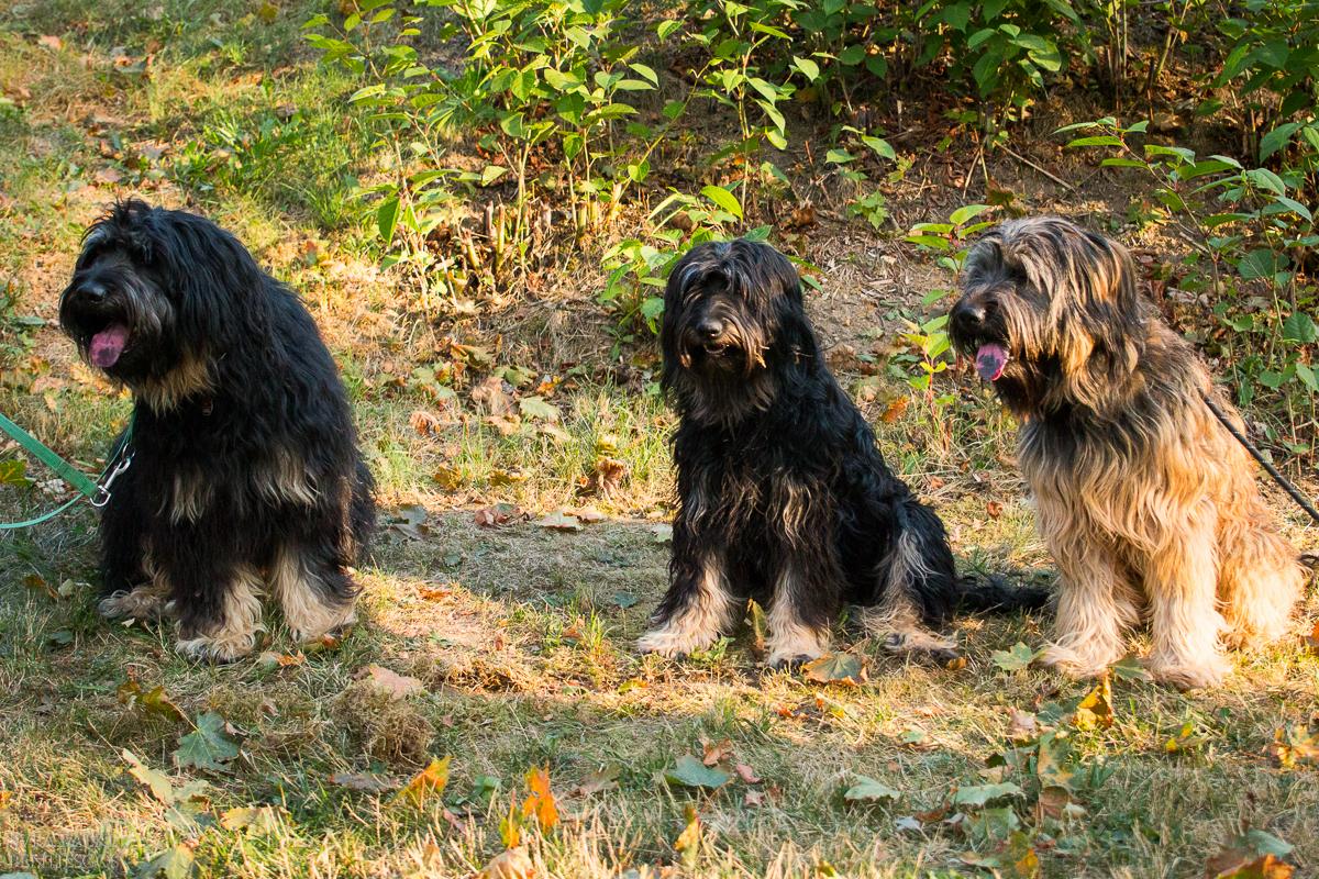 Dino, Lili und Henry
