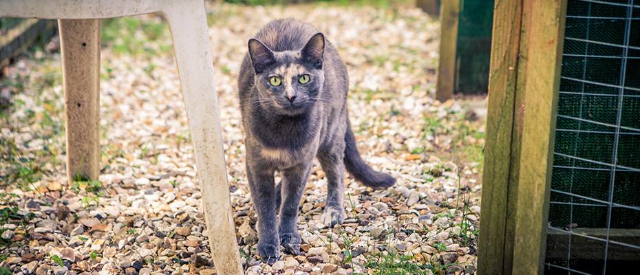 L'Arche d'Ury pension chats Seine et Marne