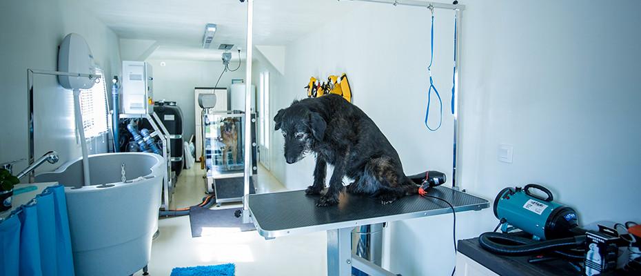 Hydrothérapie pour chien Seine et Marne 77