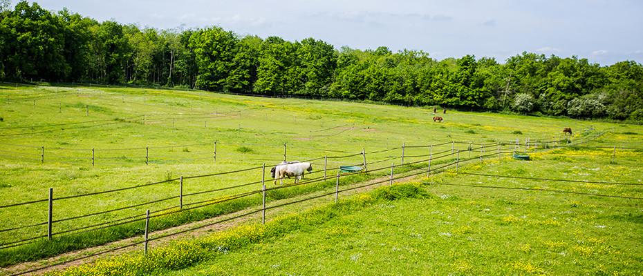 Hébergement de chevaux Pré-box Seine et Marne 77