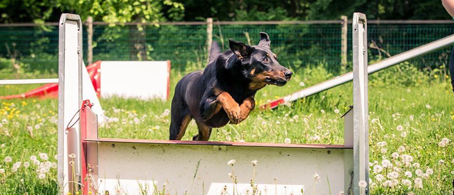 L'Arche d'Ury cours éducation canine