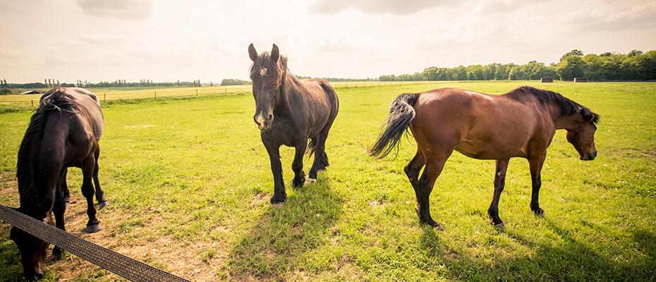 L'Arche d'Ury pension chevaux pré-abri Seine et Marne