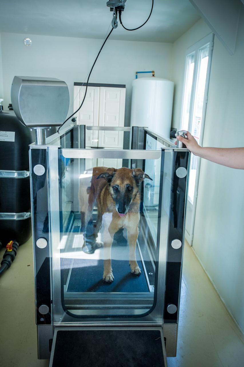 hydrothérapie-pour-chien, tapis-roulant-aquatique