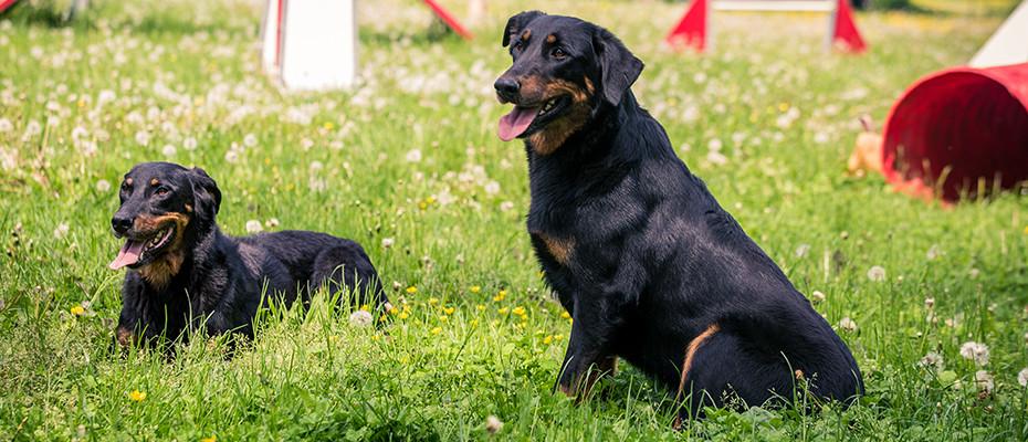 L'Arche d'Ury formation à l'éducation de votre chien