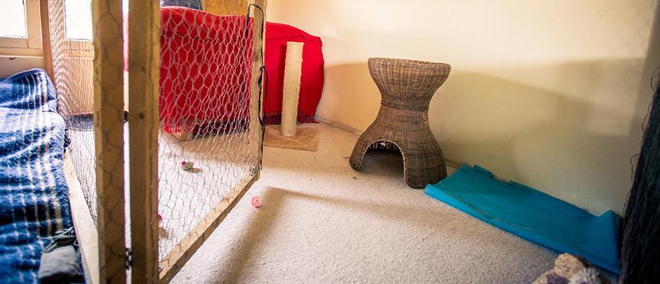 L'Arche d'Ury la pension de rêve pour votre chats en Seine et Marne 77