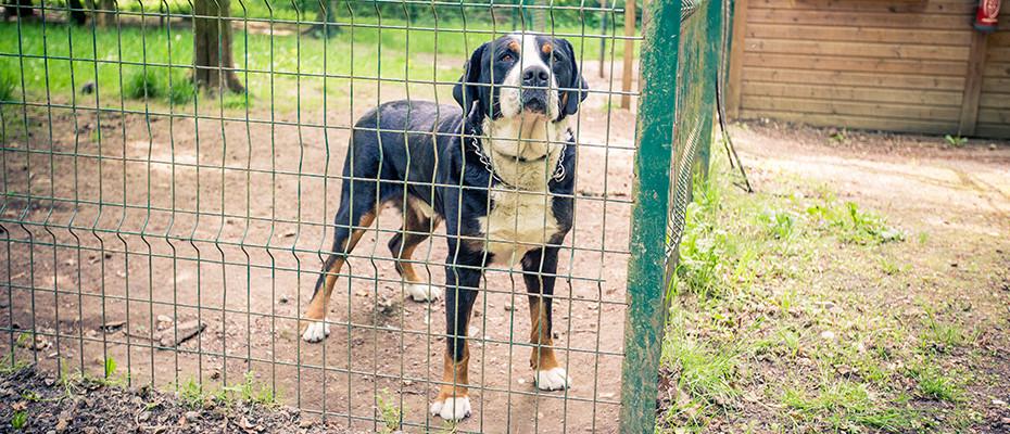 Pension pour chien Seine et Marne 77