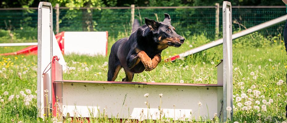 L'Arche d'Ury éducation canine Seine et Marne