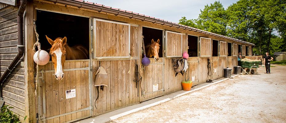 L'Arche d'Ury pension chevaux pré-box Seine et Marne