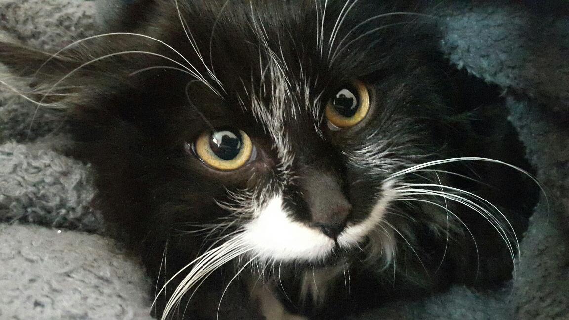 """Manchmal besucht uns unsre Katze """"Wuschel"""""""