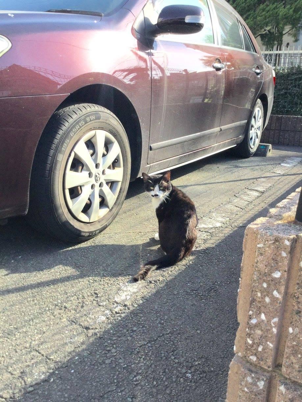 熊本城近くで出会った猫ちゃん。君も怖い思いをしたのかい?ー 場所: 熊本県 熊本市