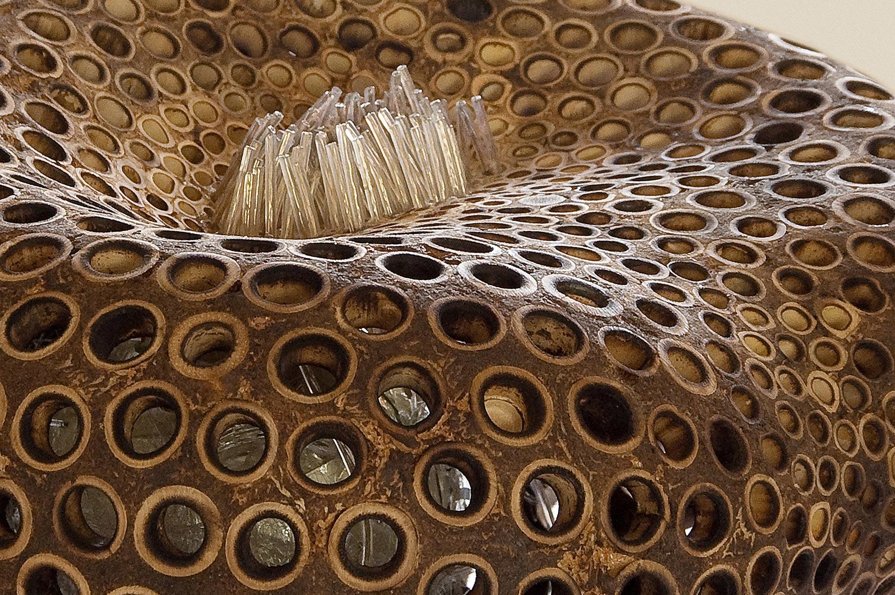 genesis 10 - protozoa fusca (Detail); 25/45/45 cm