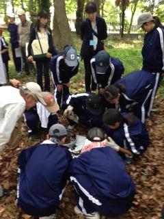 土壌生物観察