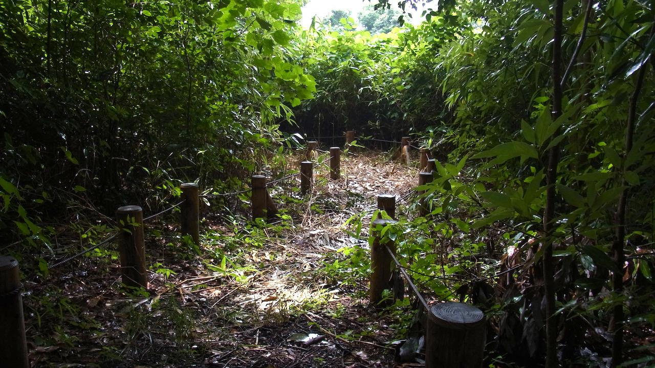 観察路 先月アズマネザサを撤去したエリア 観察の森