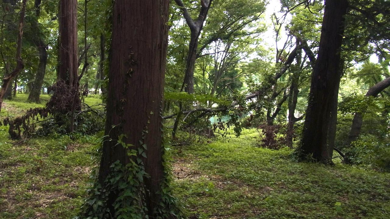 大きな倒木 歯が立ちません 自然林