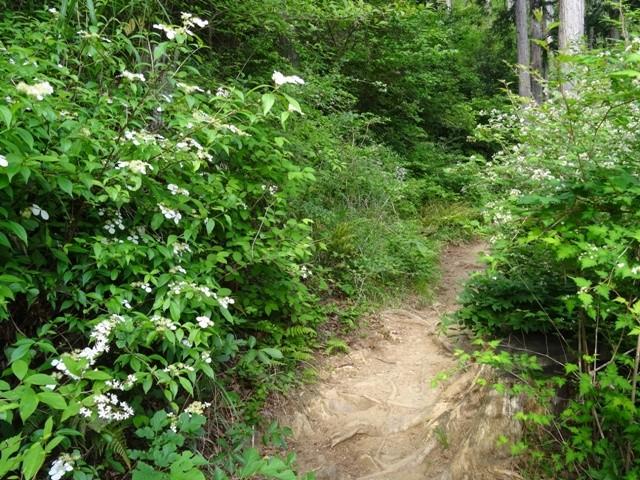新緑の高尾山を歩く