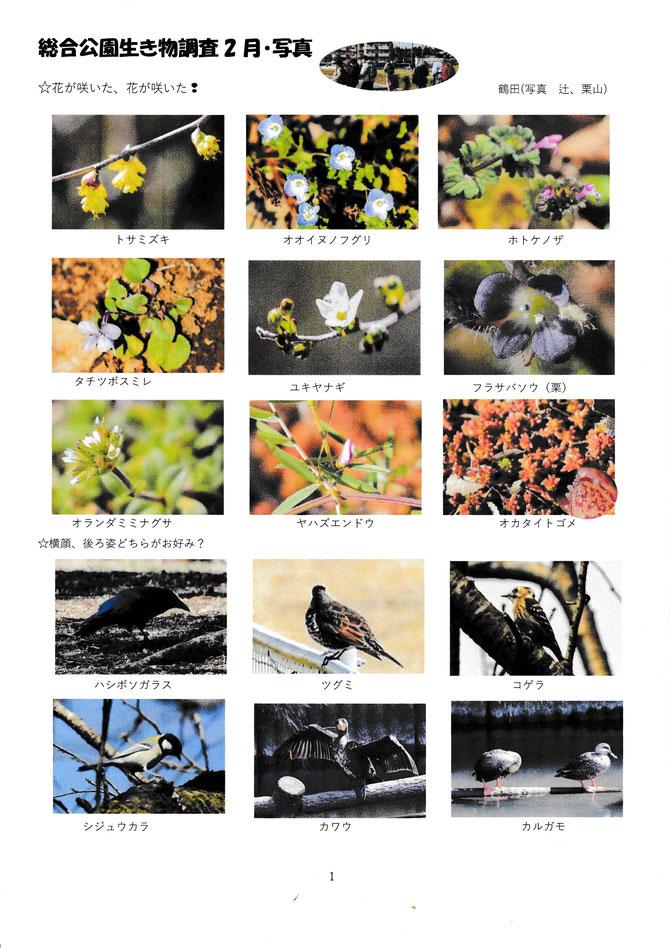 2月総合公園生き物調査写真集1