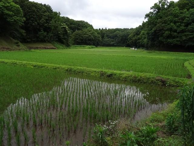 谷当の田んぼ