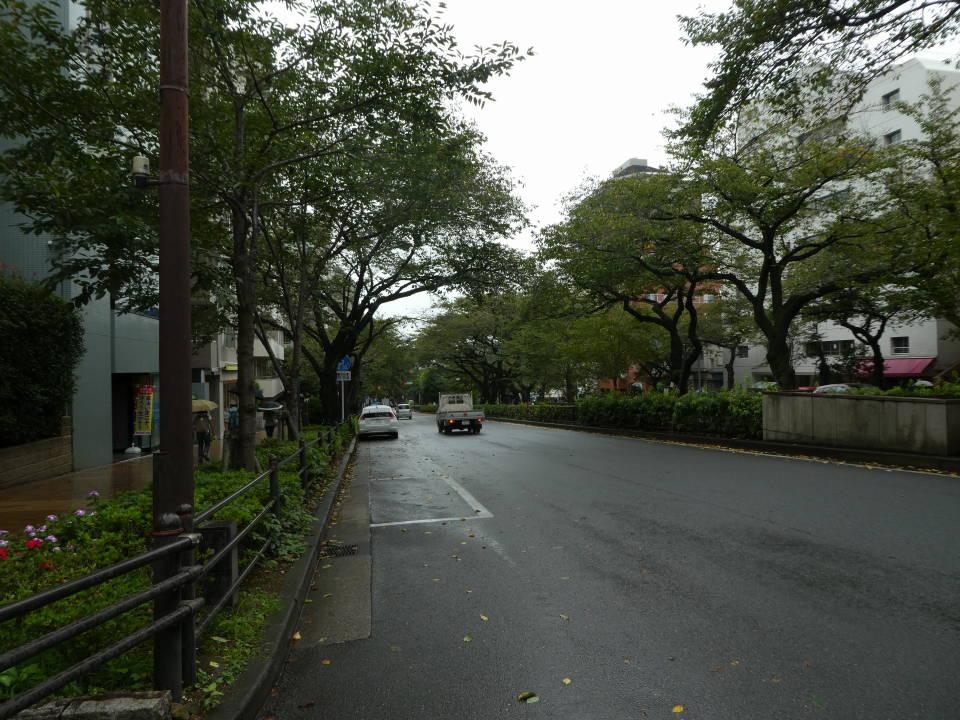 播磨坂桜並木