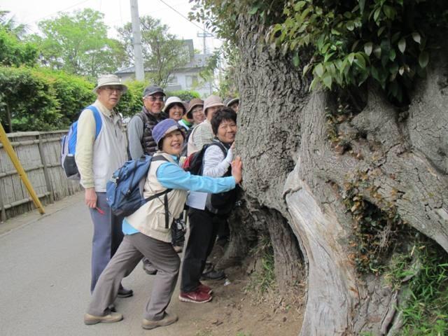 木の根とお話・・・