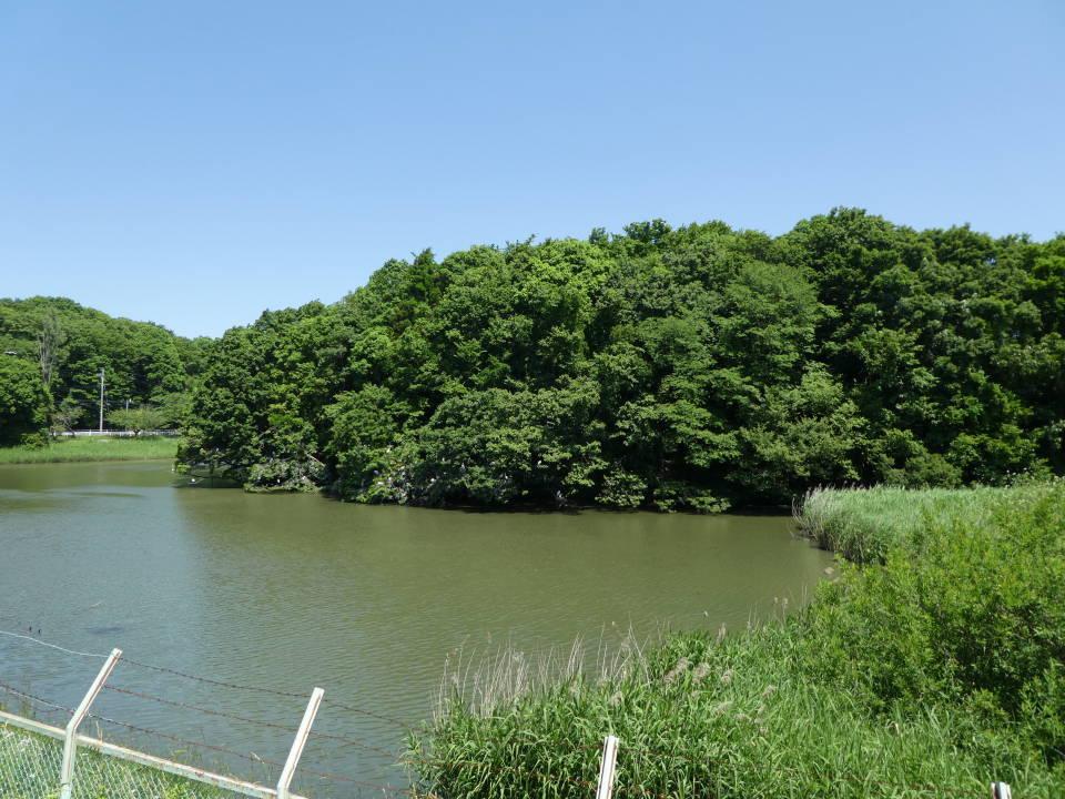 サギ山(おむすび山