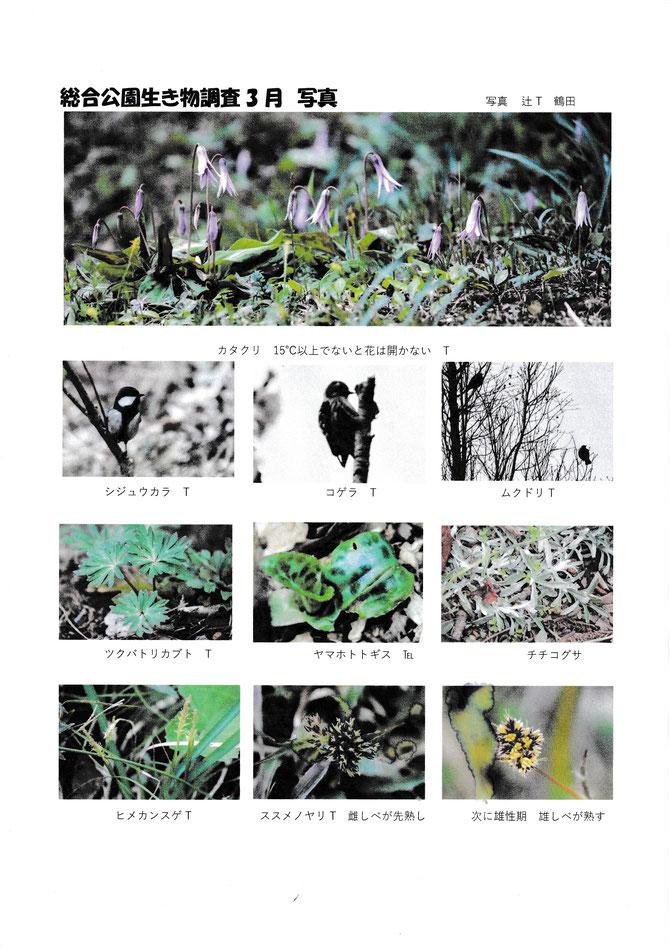 3月総合公園生き物調査1