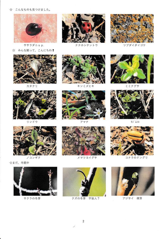 2月総合公園生き物調査写真集2