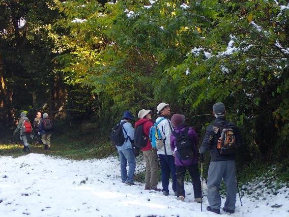 雪が残る森を歩く