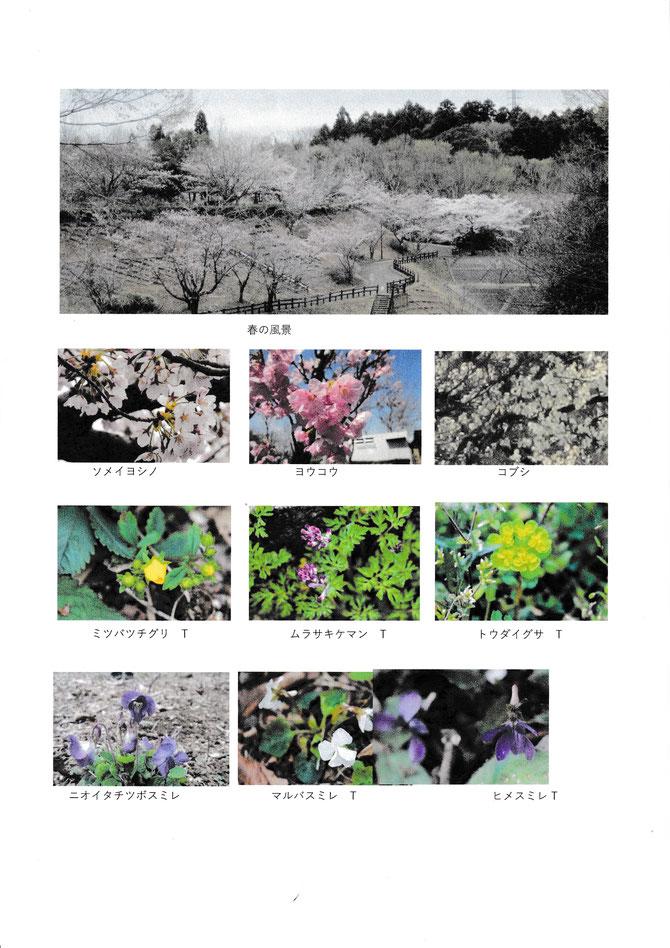 3月総合公園生き物調査2