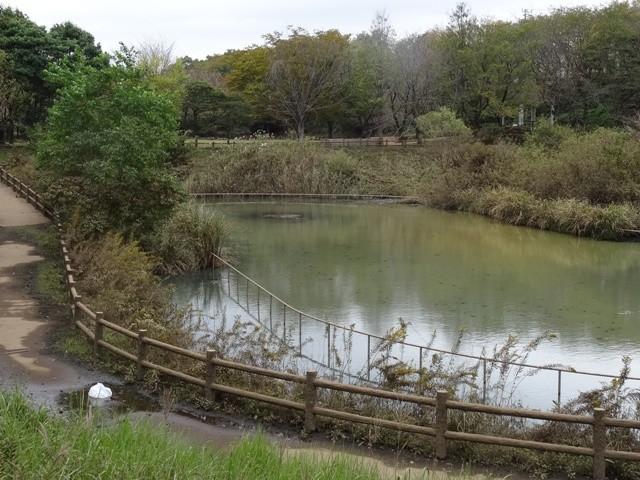 美しが丘近隣公園調整池