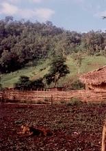 ラフー族の村の畑と犬