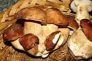 Dieta dei funghi