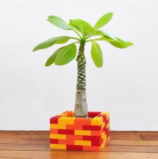 briques de construction contenant plante original