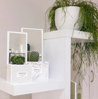 Pot décoration Reflet végétal pour cactus