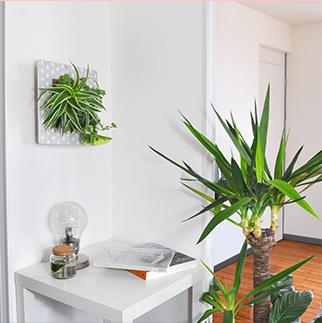 tableau végétal décoration scandinave