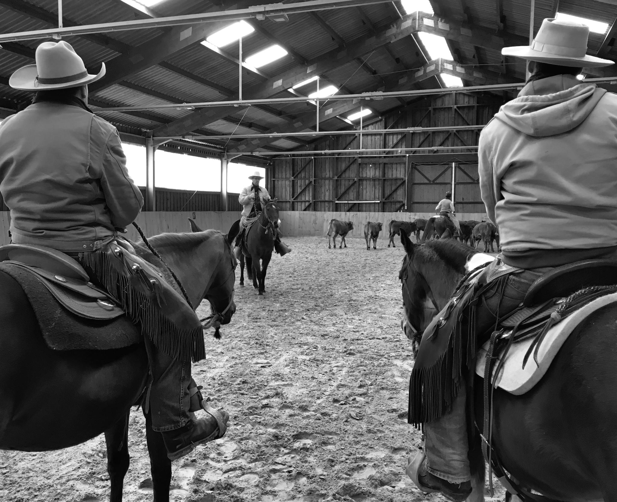 (C) JBK, Geisbach Ranch, Eifel 2016