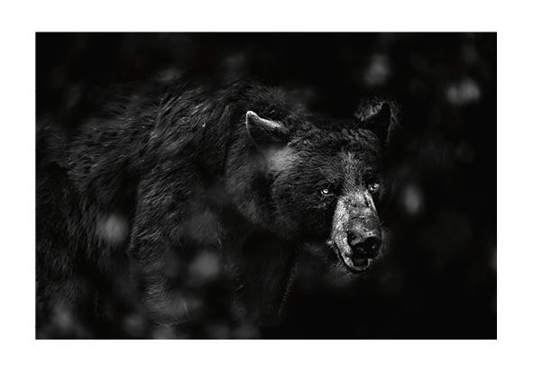 Animalier © Alain Ernoult