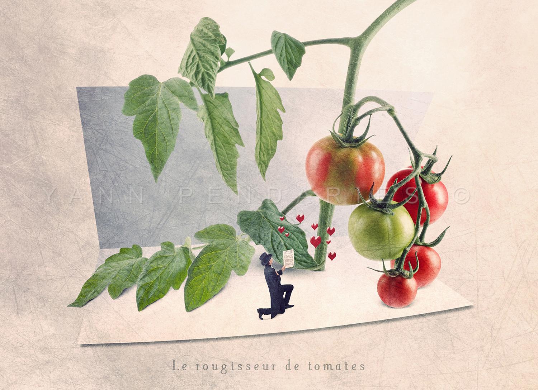 Le rougisseur de tomates © Yann Pendariès