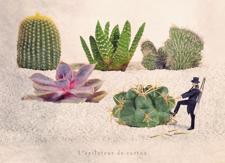 L'épilateur de cactus © Yann Pendariès