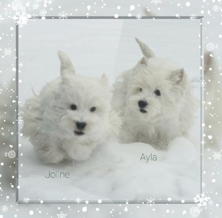 Olia Joline und Ayla 02/2021