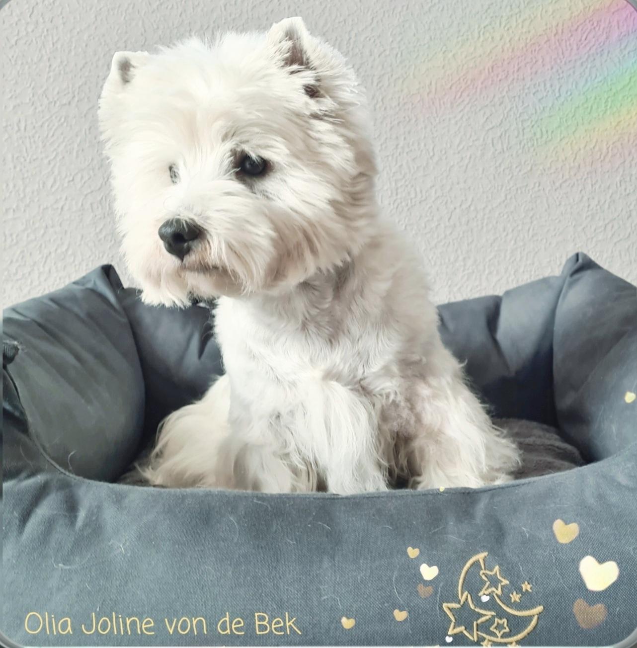 Olia Joline 04/2021