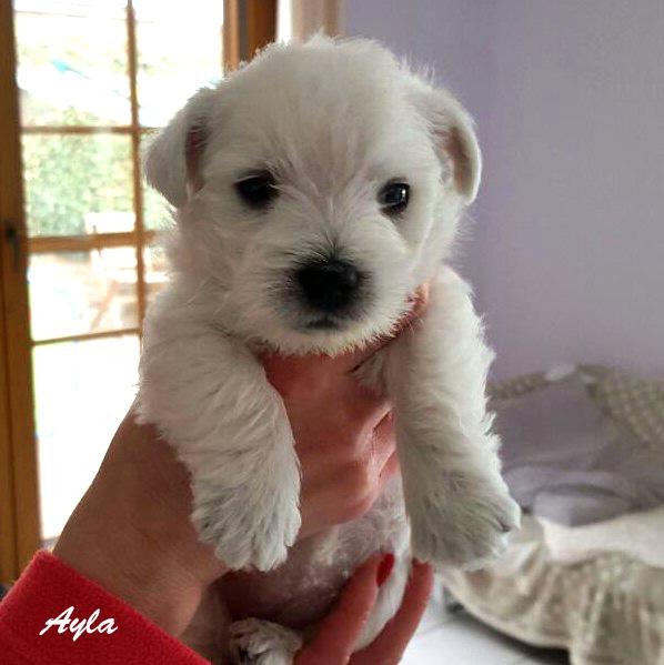 Ayla mit 5 Wochen