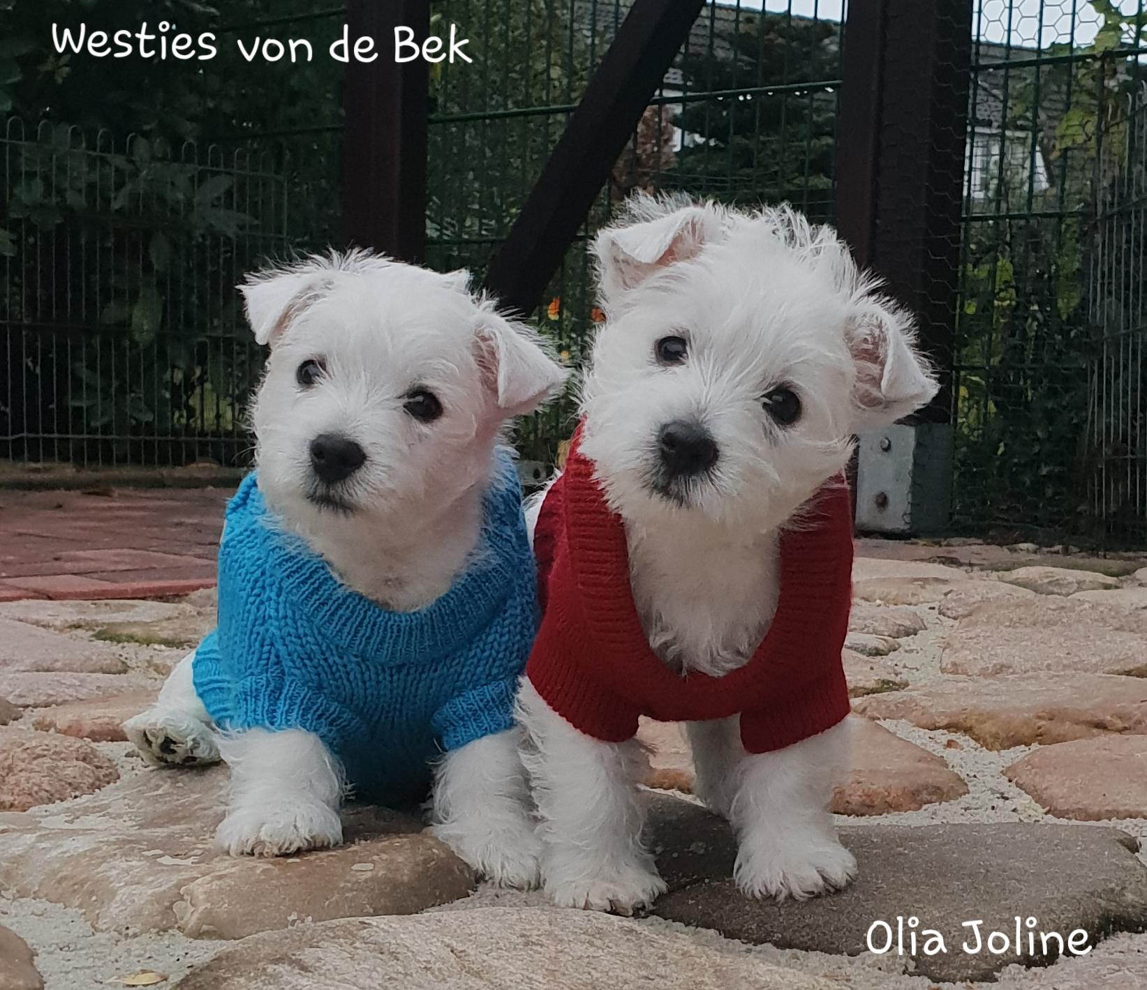 Olia Joline und ihr Bruder mit 8 Wochen