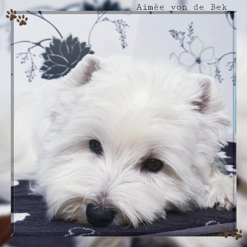 Aimée von de Bek 01/2020