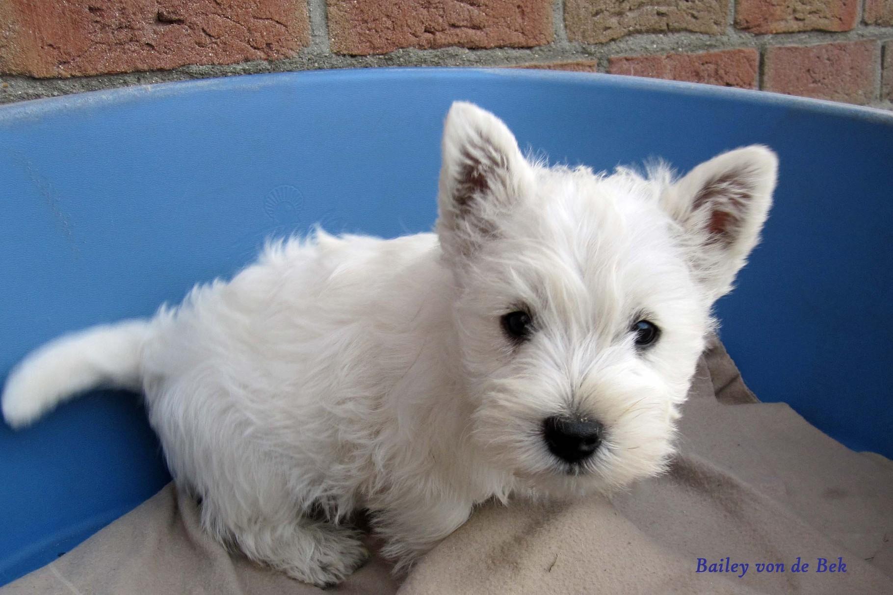 Bailey von de Bek mit 9 Wochen